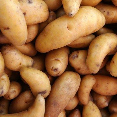 Линии переработки и упаковки картофеля