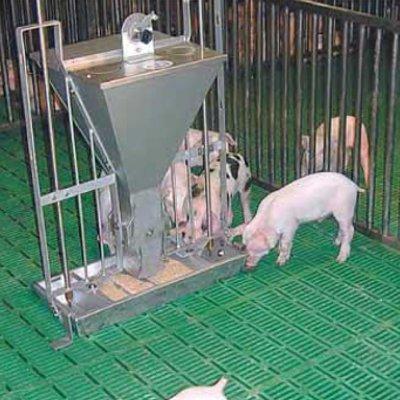 Пластиковые щелевые полы для свиноводства
